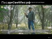 Человек, посадивший сам 65Га леса в горной пустыне