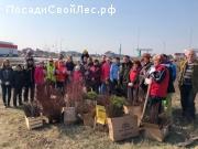 Посадка леса в Новосадовом