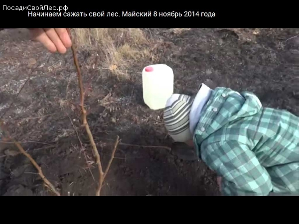 Начинаем сажать свой лес